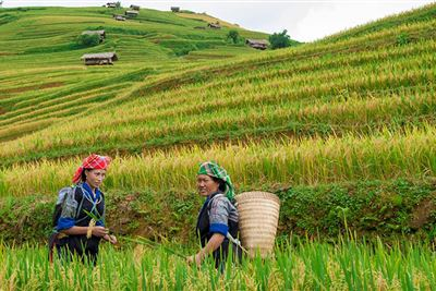 Sapa & Mu Cang Chai Trekking Tour 5 days 4 nights